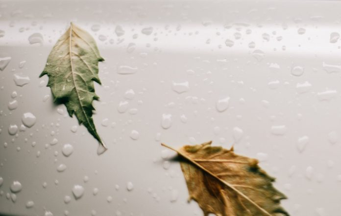 wet white surface with leaves